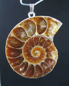 Ammonite pendants fossil ammonite pendants aloadofball Images